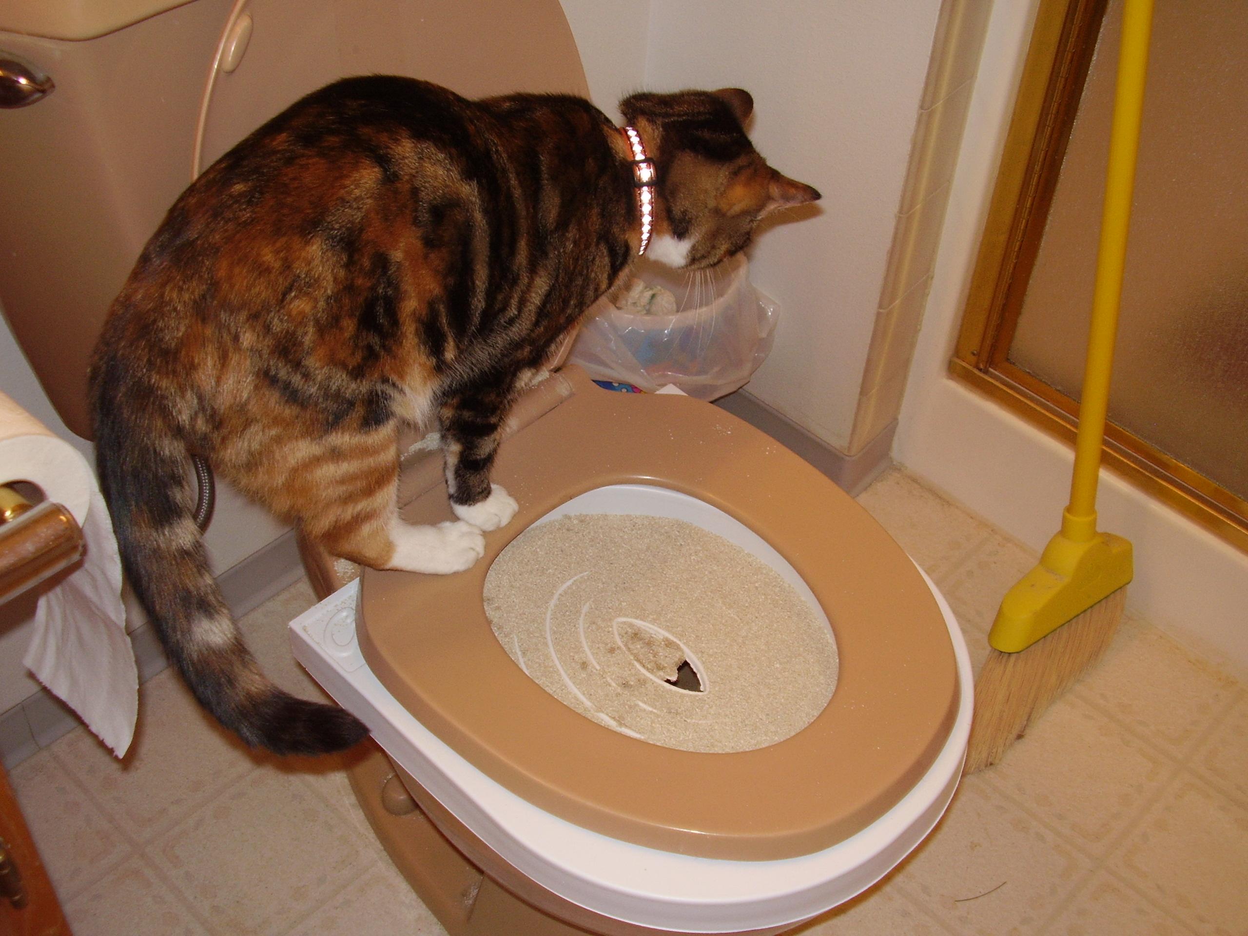 Как сделать туалет для котят своими руками
